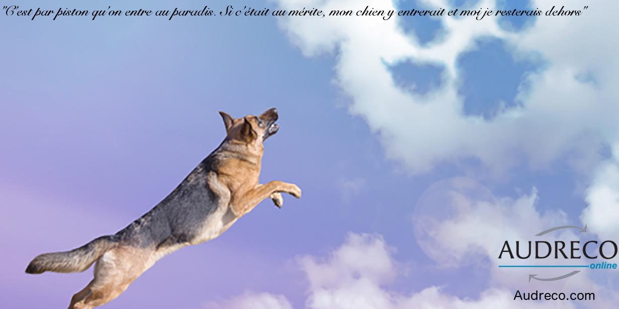Fabuleux Top 10 des citations célèbres sur les chiens - Citation No 3 KS83