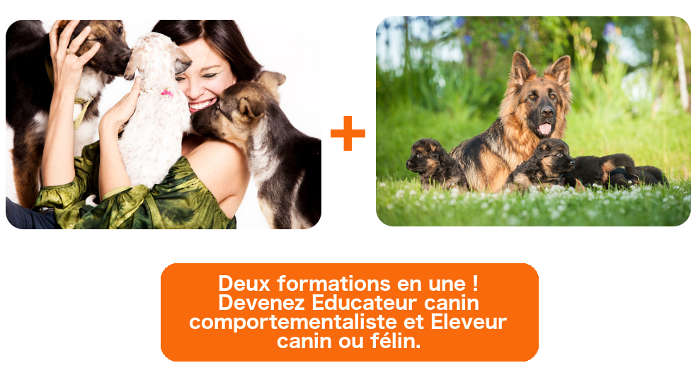 formation a distance educateur canin