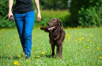 bien promener son chien