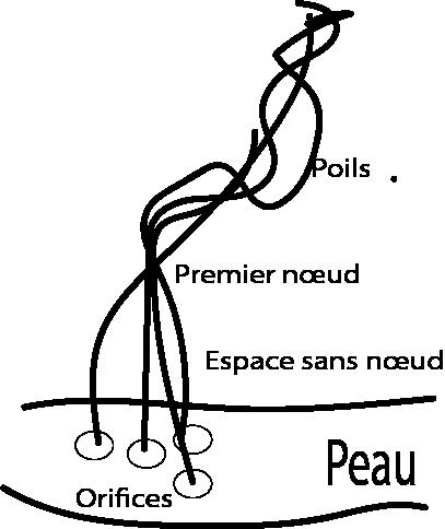Représentation d'un groupe de quatre poils