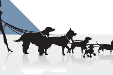 Les promeneurs de chiens promènent parfois une vraie meute