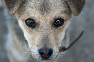 Les yeux du chien