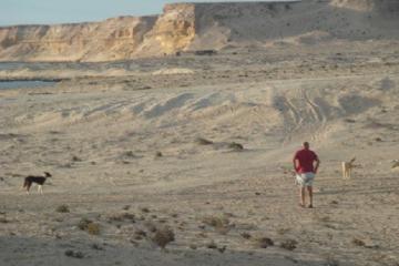 L'auteur avec deux chiens sans maître (Sud Maroc)