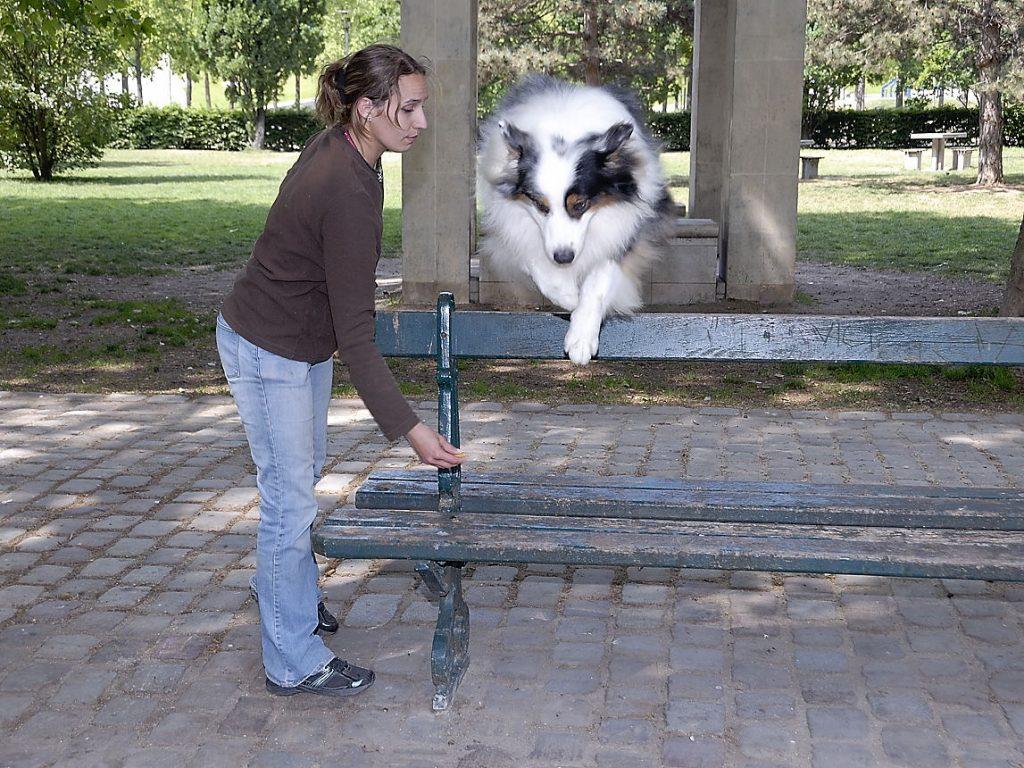 Chien sautant par dessus un banc