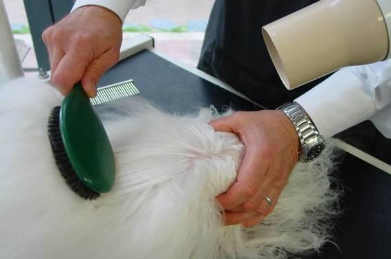 Brosse de qualité à poils de sanglier, à privilégier pour les brushings.