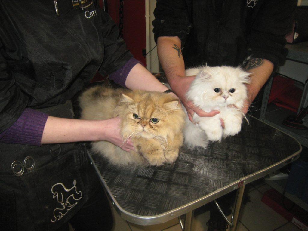 Premier toilettage de deux adorables chatons