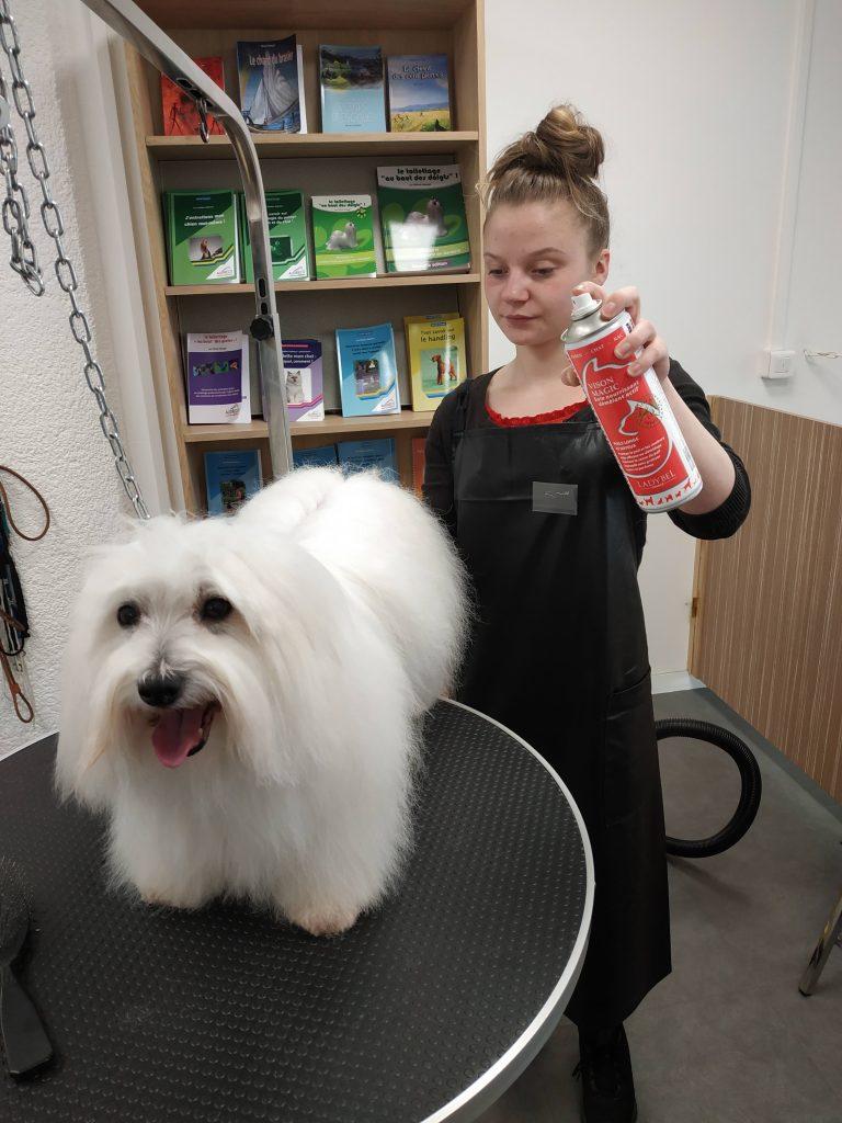 Entretenir son chien, le bons produits : il vaut mieux mettre le produit d'abord sur la brosse que directement sur le poil