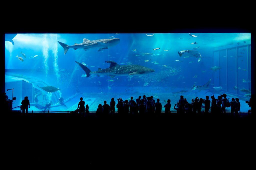 Aquarium Okinawa requins baleines