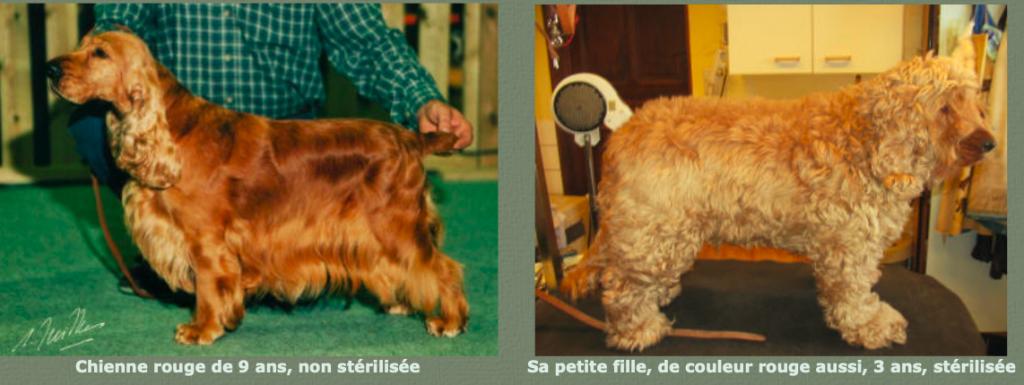 Castration et pelage : à droite, pelage d'un sujet castré