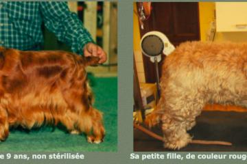 Castration et pelage : à gauche, pelage d'un sujet castré