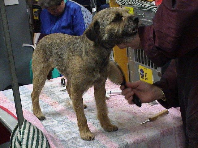 Epilation du chien : du bout du nez au bout des pattes