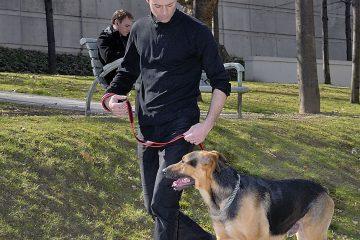 Le chien ne doit avoir qu'un seul maître dans la famille : vrai ou faux?