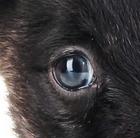 Information sur le chien : Ce qu'il voit, ce qu'il entend, ce qu'il flaire...