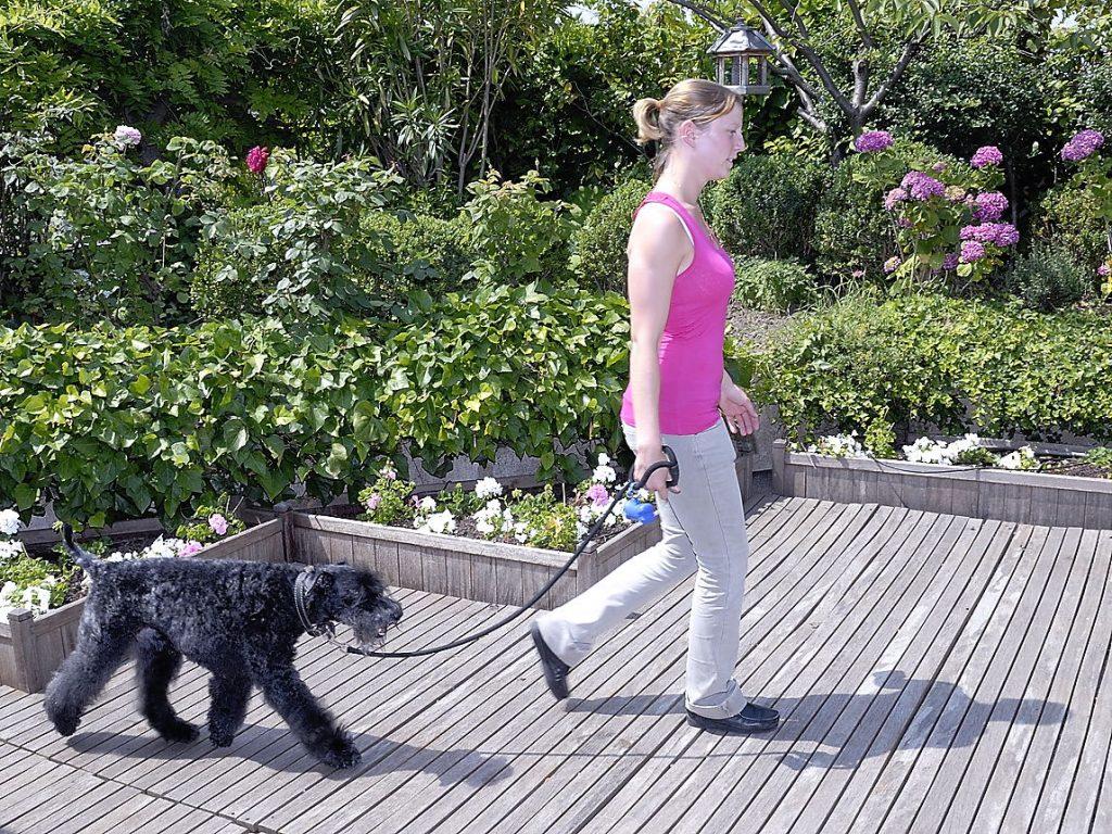 Information sur le chien : un conducteur et son chien parcourent un même espace dans deux environnements sonores complètement différents !