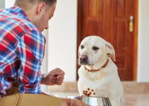 Information sur le chien : nous, humains, n'avons pas besoin d'esclaves, et les chiens n'ont pas besoin de maîtres