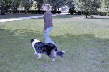 Apprendre le rappel à son chien permet de marcher sans laisse !