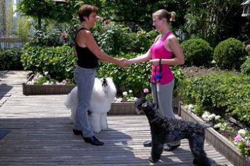 Chien en laisse : les chiens heureux ne tirent pas!