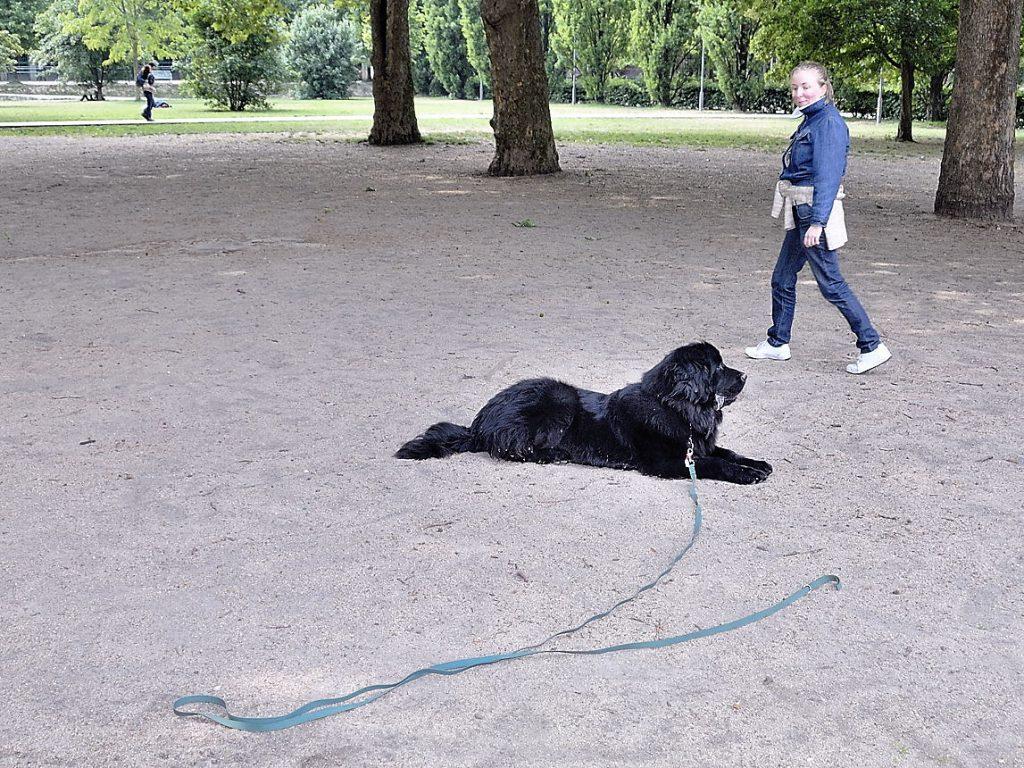 Apprendre le rappel à son chien : exercice préparatoire !