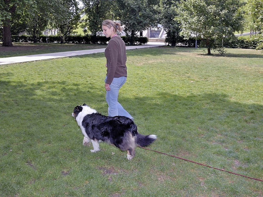 Apprendre le rappel à son chien et initiation à la marche sans laisse