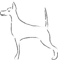 Postures et mimiques chez le chien : fier et sympa !