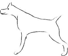 Postures et mimiques chez le chien : ?
