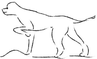 Postures et mimiques chez le chien : j'avance ?
