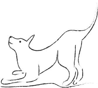 Postures et mimiques chez le chien : tu viens jouer ?