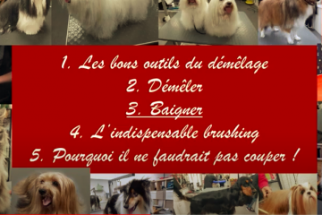 5 petits conseils des Ateliers d'Audreco